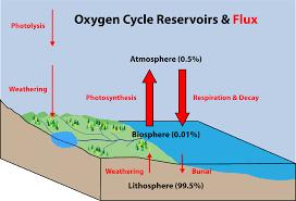 Nutrient Cycles Biospheres To Ecosystems Siyavula