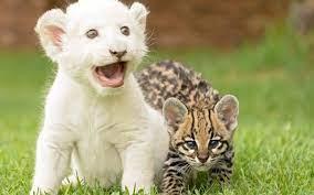 beauty, Cute, Amazing, Animal, White ...