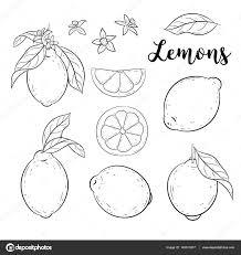 レモンを設定します落書きベクトル イラスト スケッチ ストック