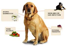 Fish Oil, A Natural Cure For Dog's Allergies : ManyHappyTails.com