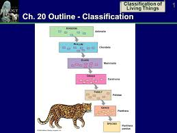 Classification Of Living Things 1 Ch 20 Outline