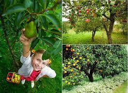 Dwarf Fruit Trees Virginia