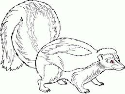 Small Picture Skunk Coloring Pages Skunk Coloring Page Animals Town Color Sheet