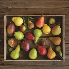 Pear Identification Chart Pear Varieties List Guide To Ten Pear Types Usa Pears