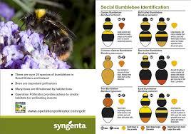 Bee Identification Chart Uk More On Bee Id Greencast