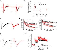 alteration of neuronal excitability and short term synaptic figure