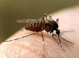 Инфекционные заболевания классификация эпидемиология лечение и  Комар
