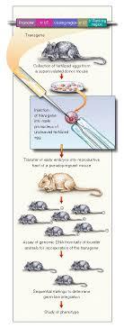 Transgenic Animals Transgenic Animals Nejm