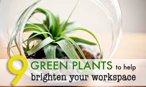 cool office plants. 9 lowmaintenance plants for the office inhabitat green design innovation architecture building cool e