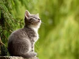 Znalezione obrazy dla zapytania cat