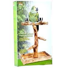 bird perch stand birds perch crossword clue perches for birds high large crossword clue birds overnight