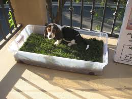 outdoor dog potty area dog grpatch for patio diy patio ideas