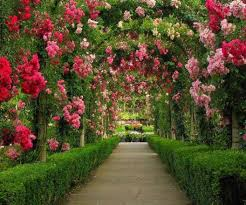 Small Picture Garden Design Garden Design with Design Your Own Rose Garden www