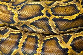 Python Pattern Cool Pattern Texture Skin Of Python Stock Photo Picture And Royalty Free