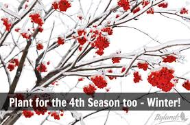 Plant for the 4th Season too Winter!