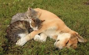 dogs and cats wallpaper. Beautiful Wallpaper HD Wallpaper  Background Image ID546330 With Dogs And Cats N