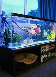 Indoor Aquarium Design Pin By Gravelian On Decor Aquarium Fish Aquarium Fish