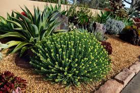 Small Picture Succulent Garden Design Markcastroco