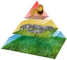 animal food pyramid. Perfect Food Food Pyramid 1 Kt8u5k For Animal Food Pyramid R