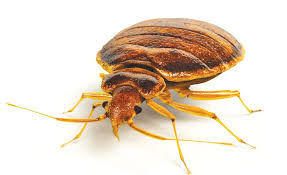 review article on distance education