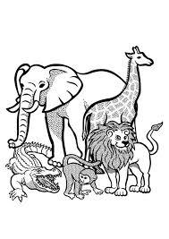Kleurplaat Zwarte Panter Ausmalbild Kuguar Oder Puma Oder Panter