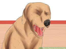 natural heartworm treatment. Image Titled Diagnose Heartworms In Dogs Step 1 Natural Heartworm Treatment
