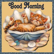 Good Morning cute cat gif kitty good morning seashell good morning greeting  | Good morning animation, Good morning cat, Morning pictures