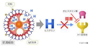 ヒスタミン h1 受容 体 拮抗 薬