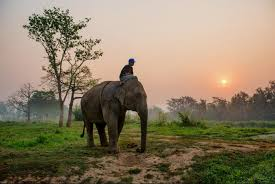 photo essay photojournalism the sun rises at anantara s golden triangle asian elephant camp near the golden triangle chiang rai thailand