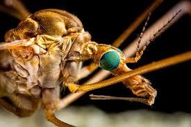 Bluetounge Virus France Extends Bluetongue Virus Restriction Zone