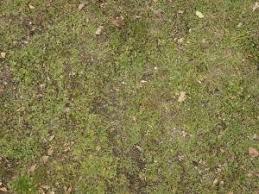 grass textures Texturelib