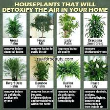 house plants names and pictures c indoor pi