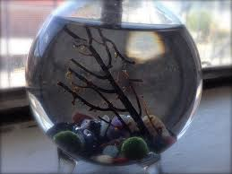 marimo moss ball terrariums from eclecticzenmarimo com