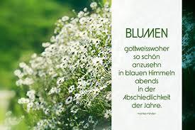 Schöne Blumen Gedichte Und Sprüche Kurze Blumenzitate