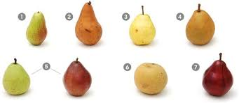 Pear Identification Chart 7 Types And Varieties Of Pears Plus Delicious Pear Recipes