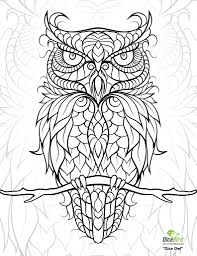 owl coloring pages for adults. Beautiful Owl IColor  In Owl Coloring Pages For Adults I