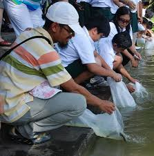 fish release ceremony essay competition mark world environment  share this
