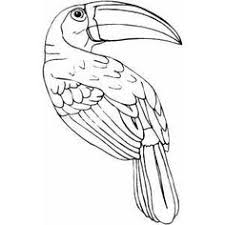 Small Picture Free Rainforest Coloring Pages Toucan coloring picture sheets