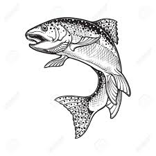 ilration realistic intricate drawing of the rainbow trout jumping out black and white sketch isolated on white background concept art for horoscope