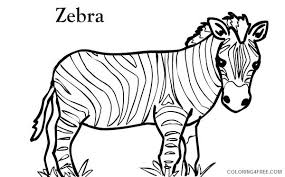 If you want zebra picture for coloring. Zebra Coloring Pages Zebra Short Zebra Printable Coloring4free Coloring4free Com