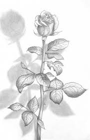 Small Picture 252 best Drawing Roses images on Pinterest Drawings Rose