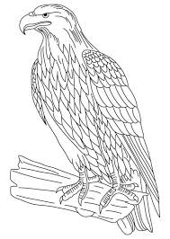 Small Picture Bald eagle coloring pages flying ColoringStar
