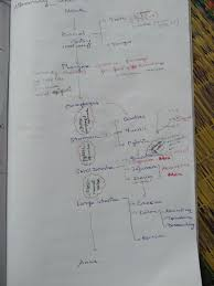Flow Chart Of Human Body Digestive System With Its Function