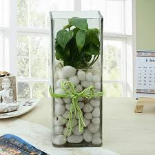 fashionable money plant terrarium