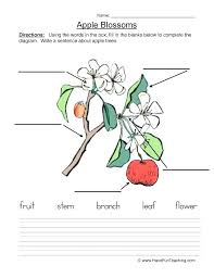 Parts Of A Plant Worksheets And Diagrams Free Printable For 2nd Grade