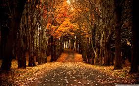 Late Autumn ❤ 4k Hd Desktop Wallpaper ...