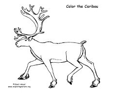 Small Picture Caribou Coloring Page