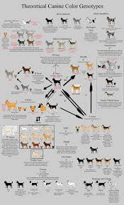 Dog Color Genetics Chart Allele Guide Canine Color By Xenothere Deviantart Com On