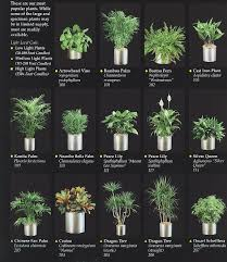 best indoor office plants. best 25 plants for office ideas on pinterest in bedroom and indoor
