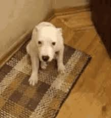 excited animal gif. Unique Gif Smile Dog GIF  Excited GIFs To Animal Gif R